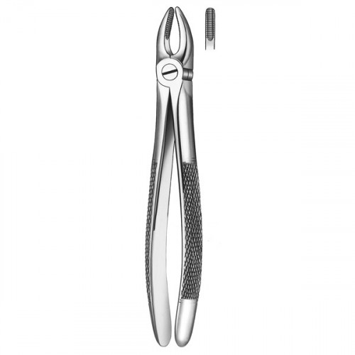 1 FORCEPS INCISIVO-CANINO SUP.