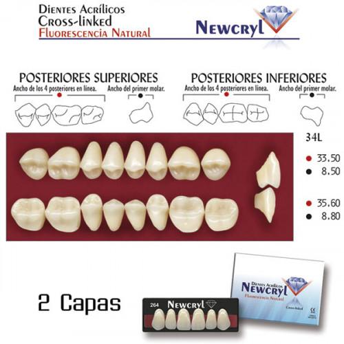 DIENTES NEWCRYL-VITA 34L UP B4