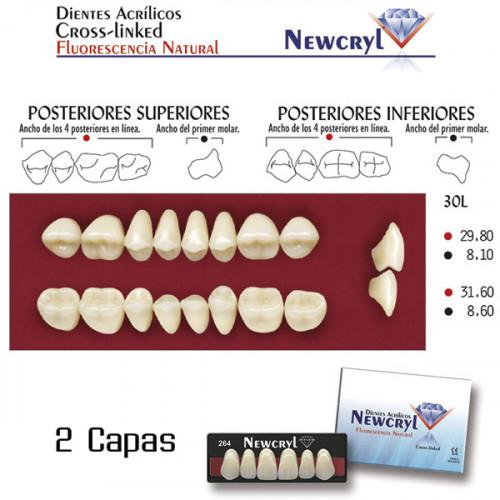 DIENTES NEWCRYL-VITA 30L UP B4