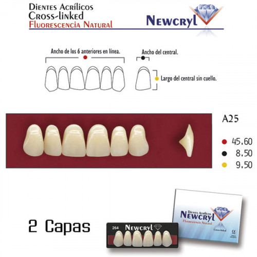 DIENTES NEWCRYL-VITA A25 UP B4